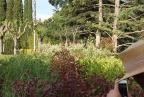 Private Garden Ametlla_jardi07